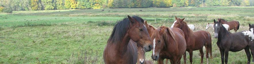 heste_1.jpg
